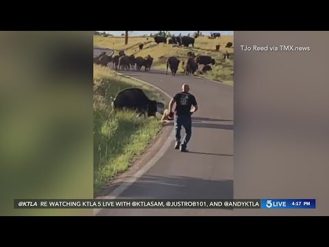 Bison attack causes South Dakota woman serious injuries