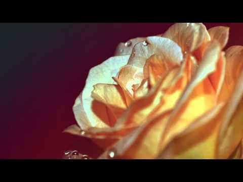 morning rose - Sssfinxxx - Morning rose ( ChillOut Lounge 2014 ) ChillOut Lounge Ambient 2014 Music https://www.facebook.com/bestchillout Support the artist: Artwork and mu...