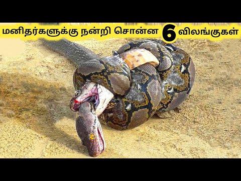 நன்றி உள்ள விலங்குகள்    Seven Amazing Rescue Animals Part 2    Tamil Galatta News