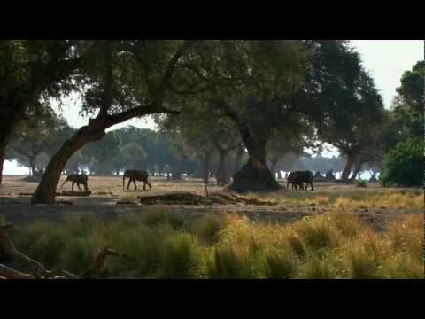 720p - Natural World BBC HD 720p 2012 http://www.bbcmotiongallery.com/