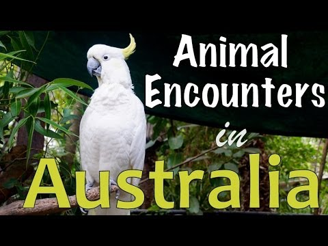 Australian Animal Encounters