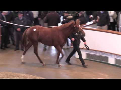 Lot 255 Galileo Colt ex Jacqueline Quest Selling for 1.2m gns