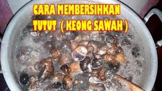 Cara Membersihkan Tutut / Keong Sawah Yang Benar