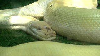 Video Petting Zoo & Aviary, Lost World of Tambun, Part 4 MP3, 3GP, MP4, WEBM, AVI, FLV Januari 2019