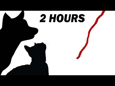 CAT GAMES - STRING STRING THING 2 HOURS ENCORE (FOR CATS ONLY)