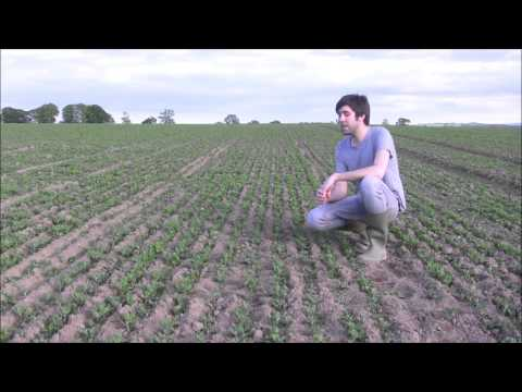 British Quinoa - 14th May 2014