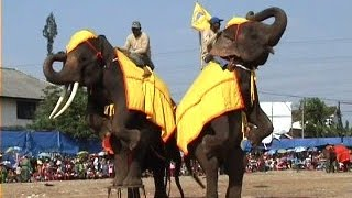 Lucu banget, atraksi sirkus Gajah Sumatera
