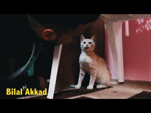 لن تصدق ماذا سوف تشاهد شاب مغربي من طنجة يتكلم مع قطته و هي ترد عليه