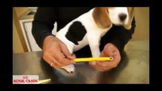 Quieres saber cómo se toma la temperatura a un perro o a un gato? Nuestro veterinario te lo explica de forma sencilla.