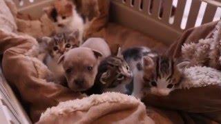 Włożyli szczeniaka do legowiska kociątek. Zobacz jak zareagowała kocica, gdy tylko go zauważyła.