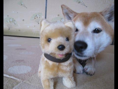 這什麼鬼 大家都怕怕 看看兩隻才犬的反應.........原來是~~~