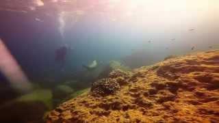 <h5>California Sea Lions</h5>