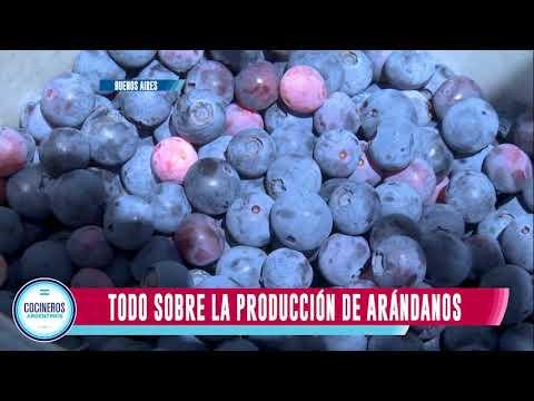 Arándanos, Industria Argentina