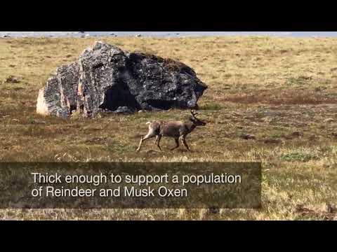 Rich Tundra Vegetation Fuels Wildfire Near Greenland Ice Sheet