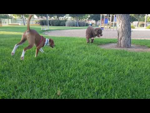 Video Dog stimulate. Running. Dog tv. For dogs download in MP3, 3GP, MP4, WEBM, AVI, FLV January 2017