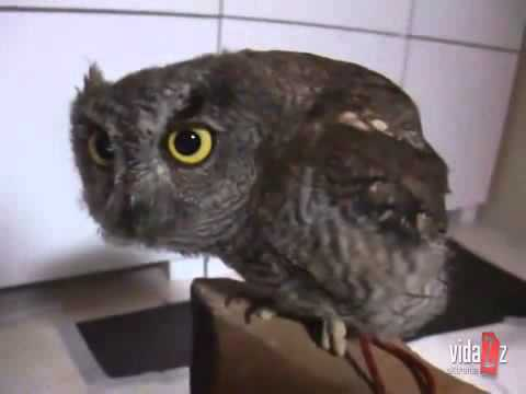 owl - Cutest Owl Ever.