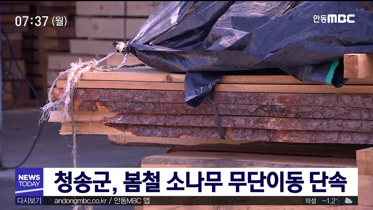 청송군, 봄철 소나무 무단이동 단속