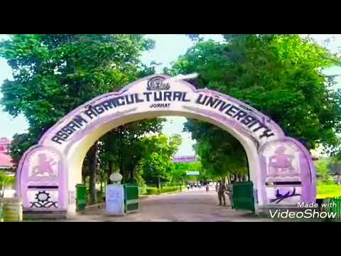 Video Assam Agricultural University / GOLDEN JUBILEE{2018}..// Rally// download in MP3, 3GP, MP4, WEBM, AVI, FLV January 2017
