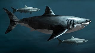SharkWeek  Starts TOMORROW! Was Megalodon real? Does it still exist today? We're laying all of the rumors to rest. Stream Full Episodes Now on Discovery ...