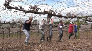Pruning Dance.