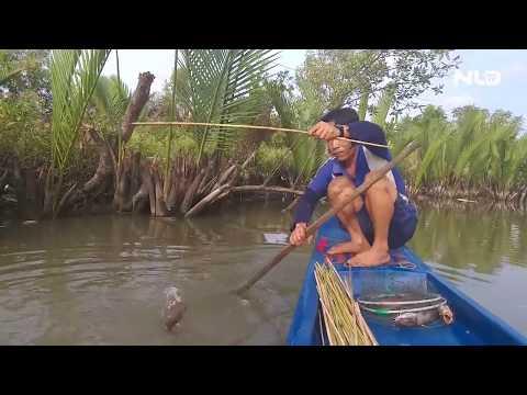 Về Cà Mau xem cắm câu cá ngát trên sông | NLĐTV - Thời lượng: 93 giây.