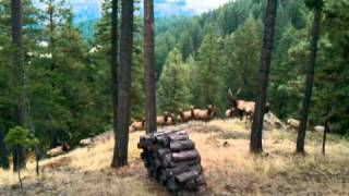 Cle Elum (WA) United States  city pictures gallery : Elk herd @Cabin near Cle Elum, WA