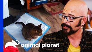 Cat's Pee Problem Is Turning Owners House Into A Litter Box! | My Cat Form Hell by Animal Planet