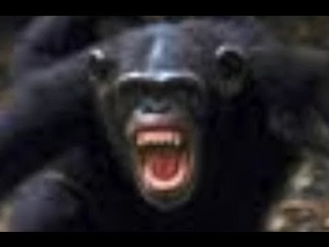 MMA Instructor tells story of the time he fought a chimpanzee