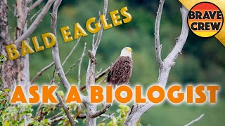 ASK a BIOLOGIST - Lesson 51: Eagles by Brave Wilderness