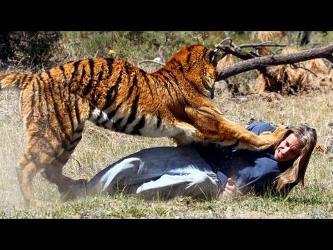 Tiger - Tiger Attacks Man: Real Tiger Attack Stunt SUBSCRIBE: http://bit.ly/Oc61Hj MEET the only man in the world who can withstand a full-scale assault by a 400lb t...