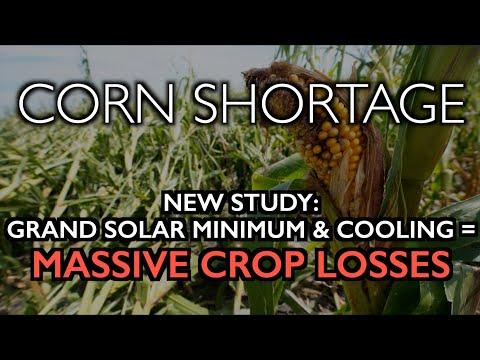 CORN SHORTAGE: Grand Solar Minimum Kills Crops (New Study)