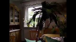 Palmen bauen