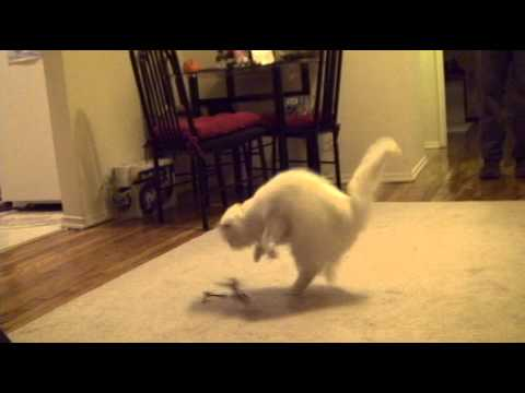 Cat VS. Helicopter