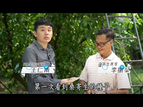 【中醫出任務─藥草小學堂─王仁甫中醫師】20200809桑寄生
