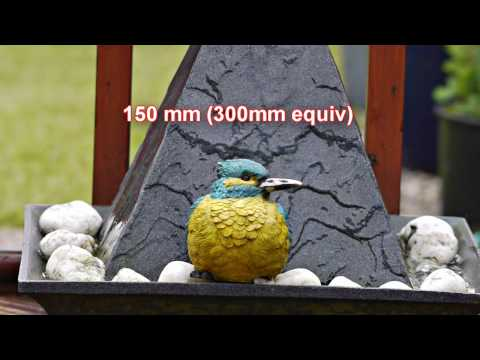 Test of Sigma 150-500mm lens on Panasonic GH1 for video
