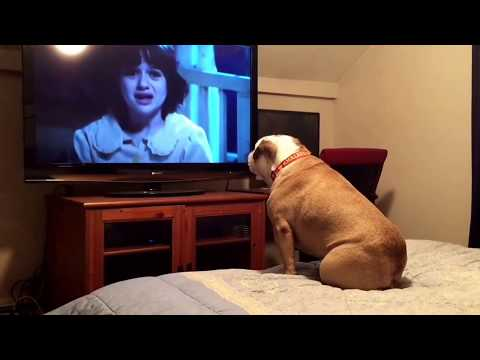Bulldog Tries to Warn Horror Movie Victims