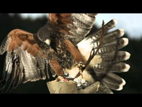 University - Inspired by nature's own anti-turbulence devices – feathers – RMIT University researchers have developed an innovative system that could spell the end of turbulence on flights. Researchers...