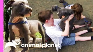 Pit Bull Puppies' First Visit To The Dog Park | Too Cute! by Animal Planet