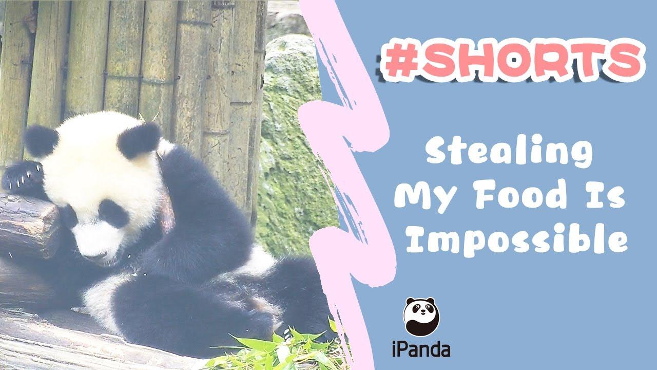 Панда решила вздремнуть, но сначала позаботилась, чтобы никто не украл ее лакомство