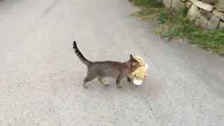 Ten koteł nie ma skrupułów! Taki drapieżnik w domu może być niebezpieczny :D