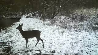 <h5>Riverside TrailCam Jan 2016</h5>