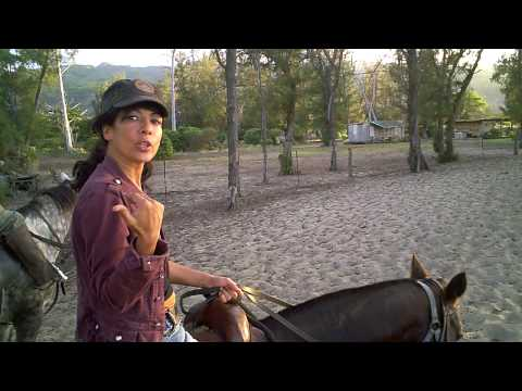Hawaii Horseback Riding - Polo Horse Trail Rides on the Beach