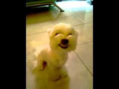 太可愛了~~看到這隻狗的表情你一定會笑死!!