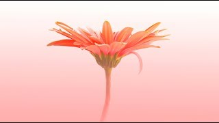 Video Mantra for Healing & Protection from Negativity | Guru Ram Das Mantra Chants MP3, 3GP, MP4, WEBM, AVI, FLV September 2018