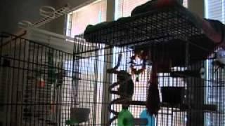 Parrot Sings 'Let the Bodies Hit the Floor'