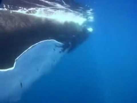 Tekst piosenki Pearl Jam - Whale Song po polsku