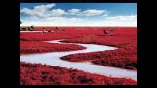 Panjin China  city pictures gallery : Red Beach of Panjin, China 盤錦紅海灘