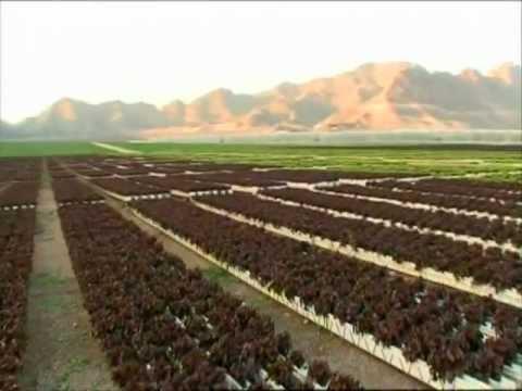 Cultivo de lechuga sin sustrato sistema NGS