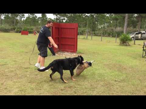 ARC Beaucerons - Hawk working in protection