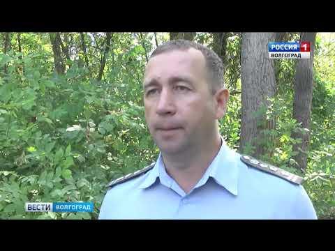 В Волгоградской области обнаружен опасный карантинный объект - ясеневая изумрудная златка